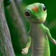 geckopsych