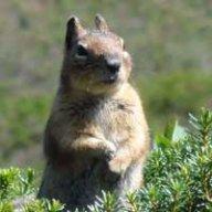 rtsquirrel