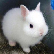 bunny1215