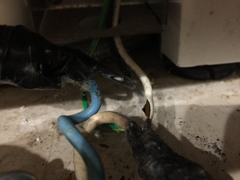 Dishwasher wiring 3.JPG