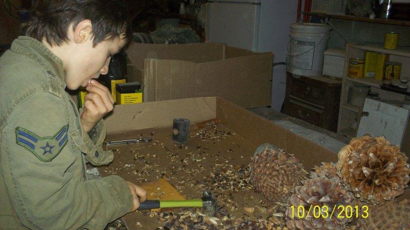 pine nuts.JPG